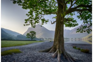 BUTTERMERE SOLITARY TREE